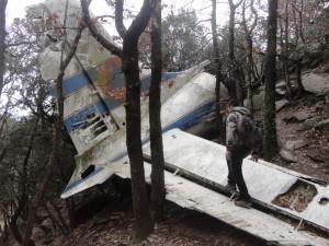 Fragment de l'avió entre arbres